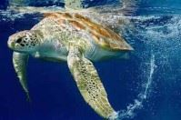 La tartaruga Sandy liberata dal Centro di Recupero di Manfredonia