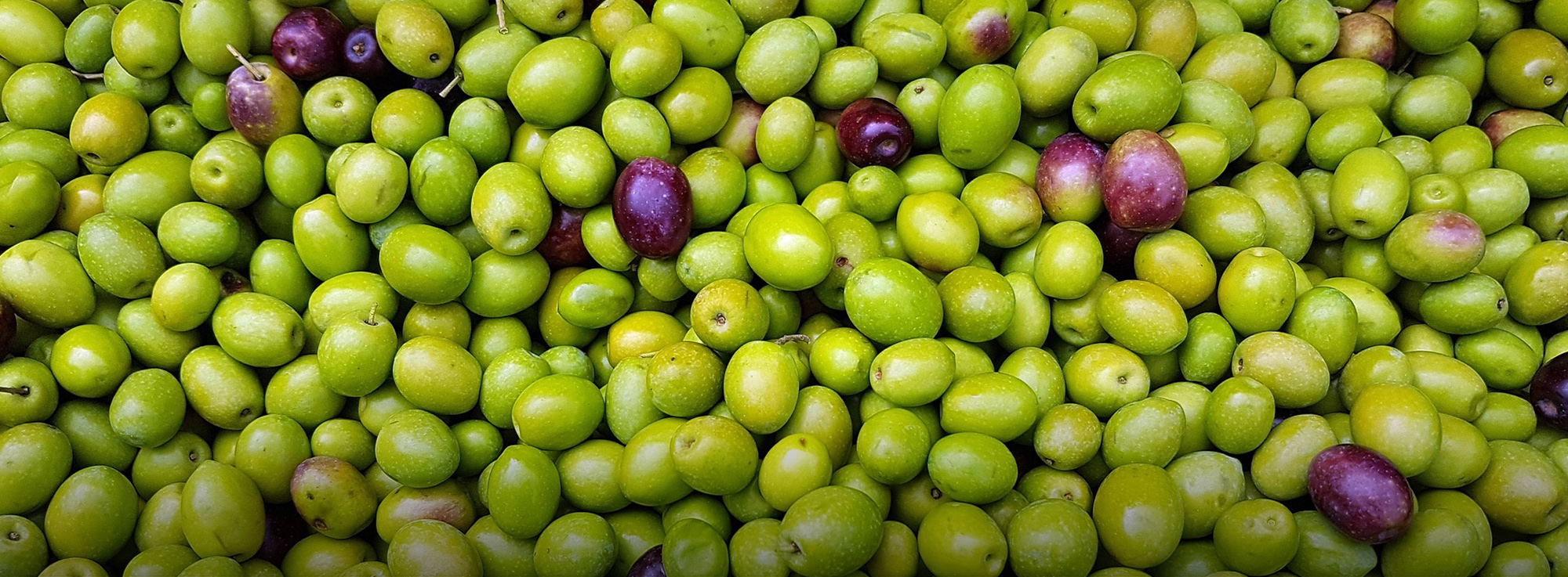 Ricetta: Olive dolci fritte