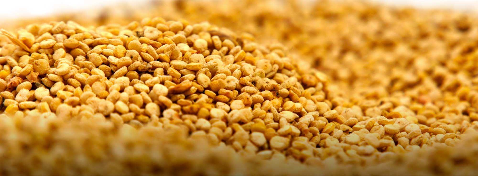 Ricetta: Grano stumpato col sugo