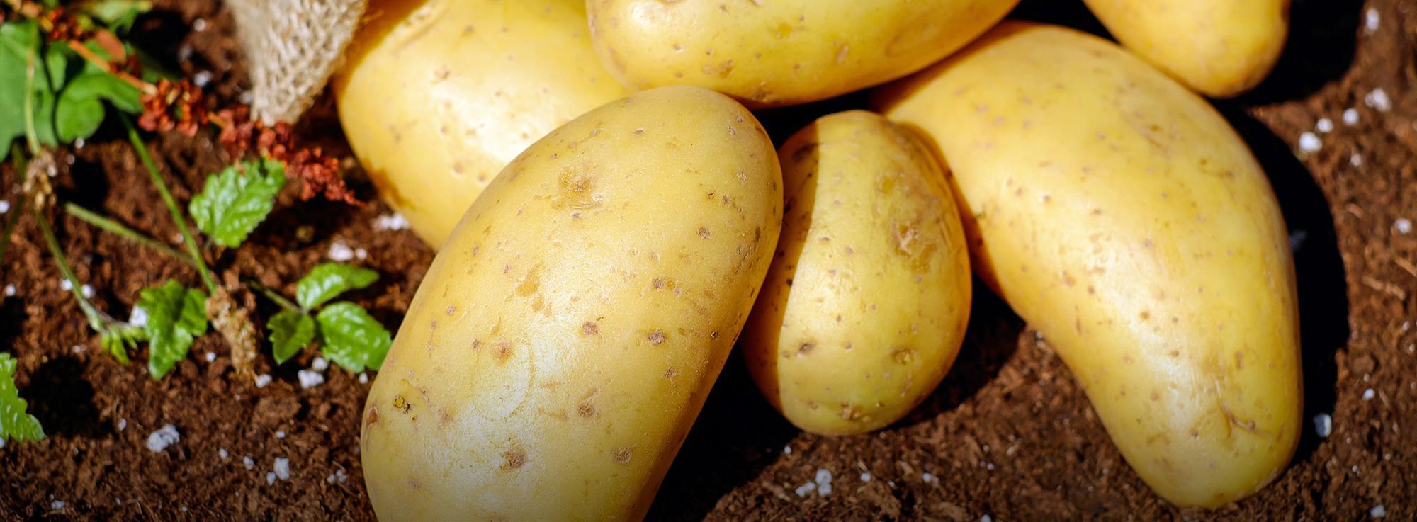 Ricetta: Pitta di patate