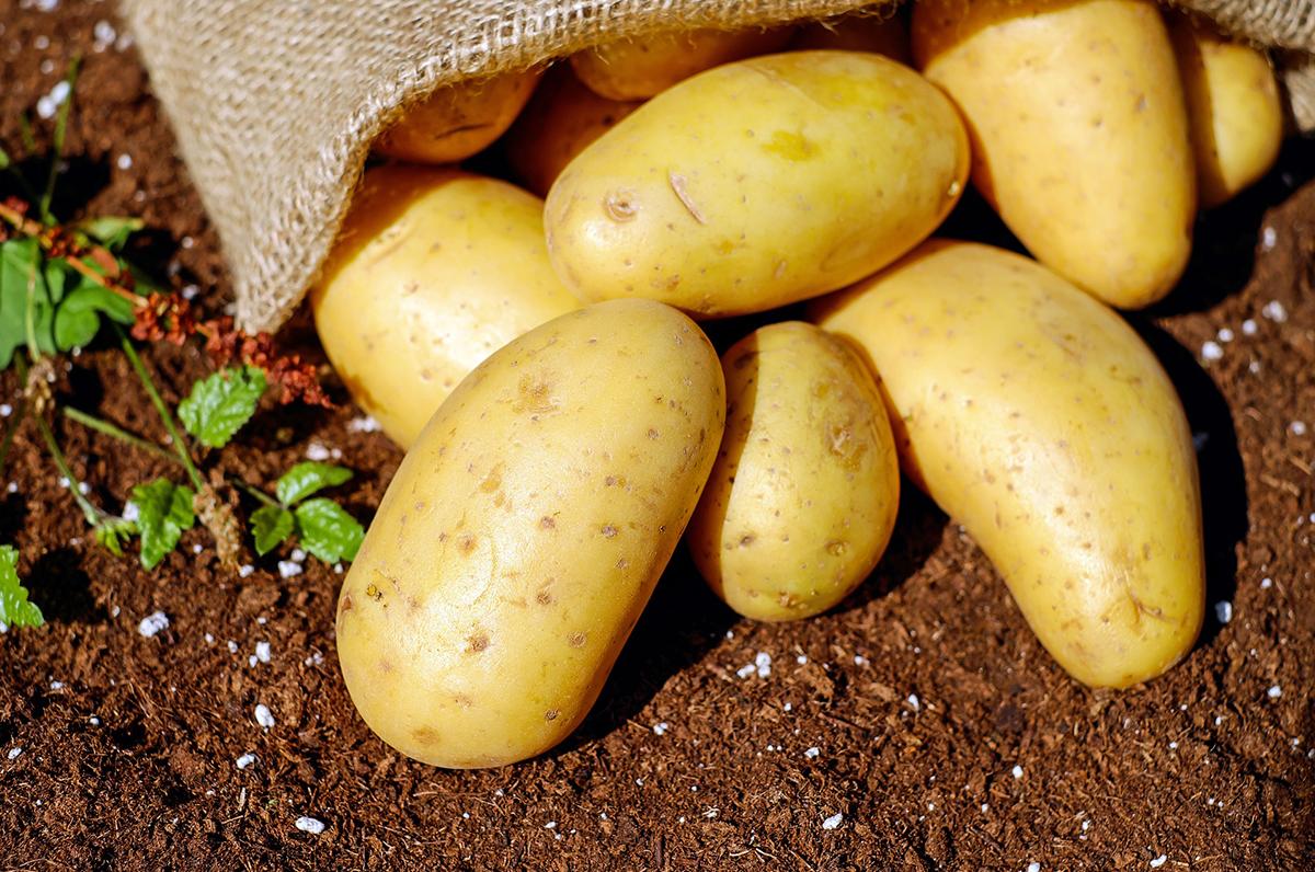 Pitta di patate