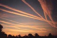 Scie chimiche alla base della Xylella: la Poli Bortone stupisce il web