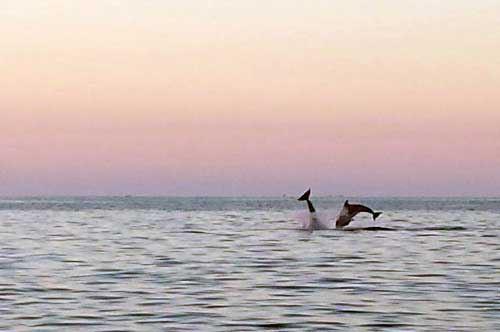 Magia al tramonto in Salento: la danza dei delfini conquista la rete