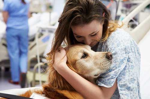 Pet therapy e musicoterapia, ora in Puglia si può