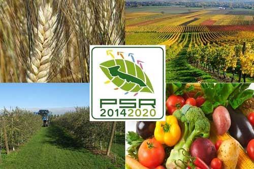 Bando per lo sviluppo rurale, la Puglia investe nell'ecosostenibilità