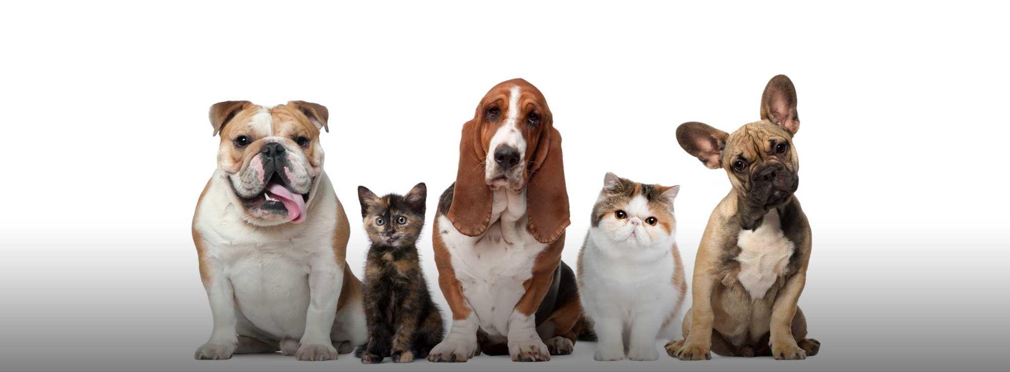 Trani: Animale… a Chi???