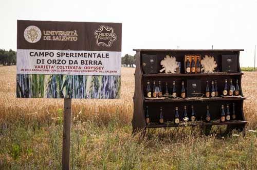 Leverano, festa dell'orzo per la birra made in Salento