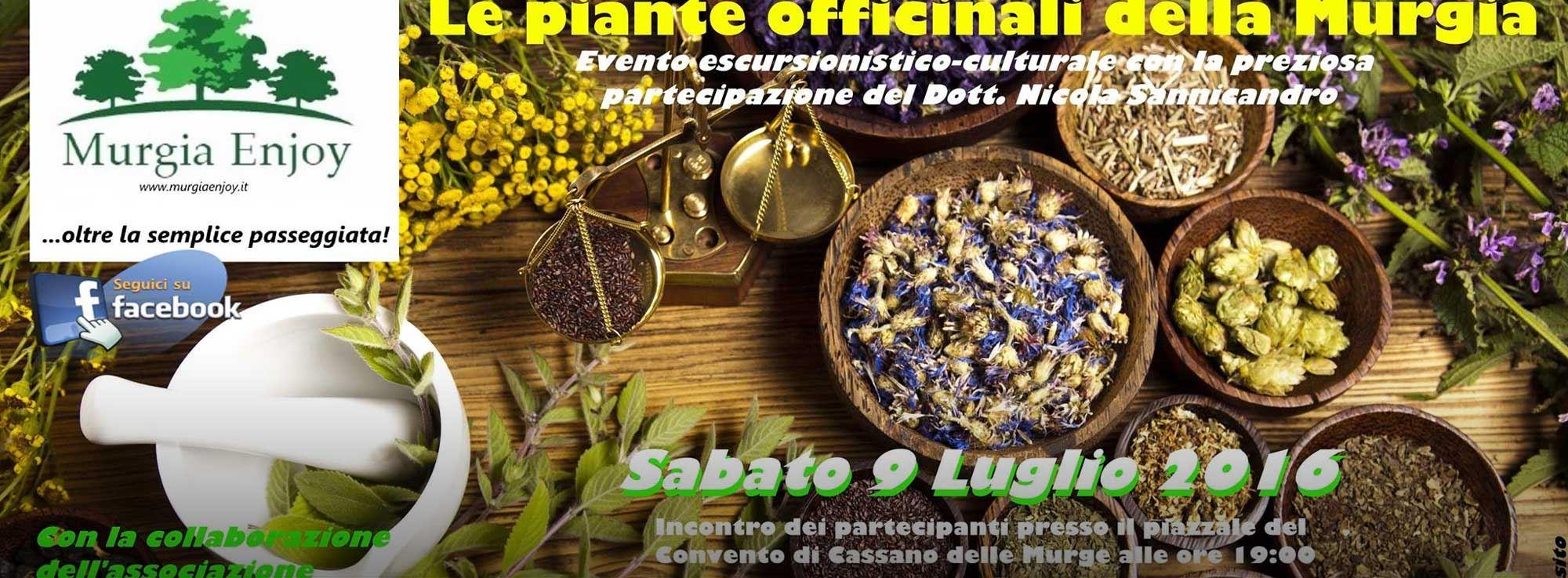 Cassano delle Murge: Le piante officinali della Murgia