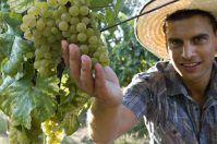 Agricoltori pugliesi Under 40, al via un bando da 40 milioni