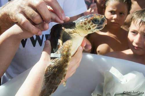 """Torre Guaceto, weekend di emozioni: liberata una tartaruga con dedica """"speciale"""""""