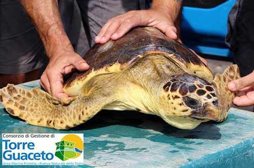 Torre Guaceto, sei tartarughe restituite al mare