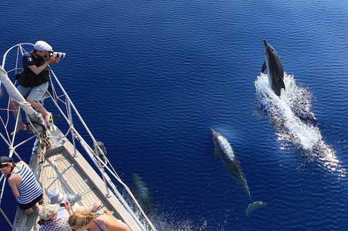 No ai delfinari, sì ai rifugi a mare: il progetto della Jonian Dolphin Conservation