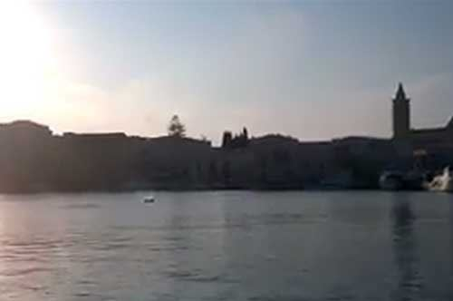 Delfino nel porto di Trani, l'avvistamento che fa sorridere