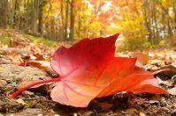 Domani al via l'autunno, arriva il freddo sulla Puglia
