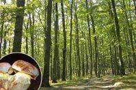Per funghi in Foresta Umbra