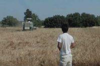 Mulino di comunità, in Puglia si può: il primo esempio a Castiglione d'Otranto