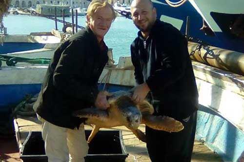 Trani, sei tartarughe restituite al mare