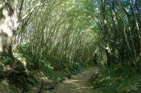 Da Martina Franca escursione nel Bosco delle Pianelle