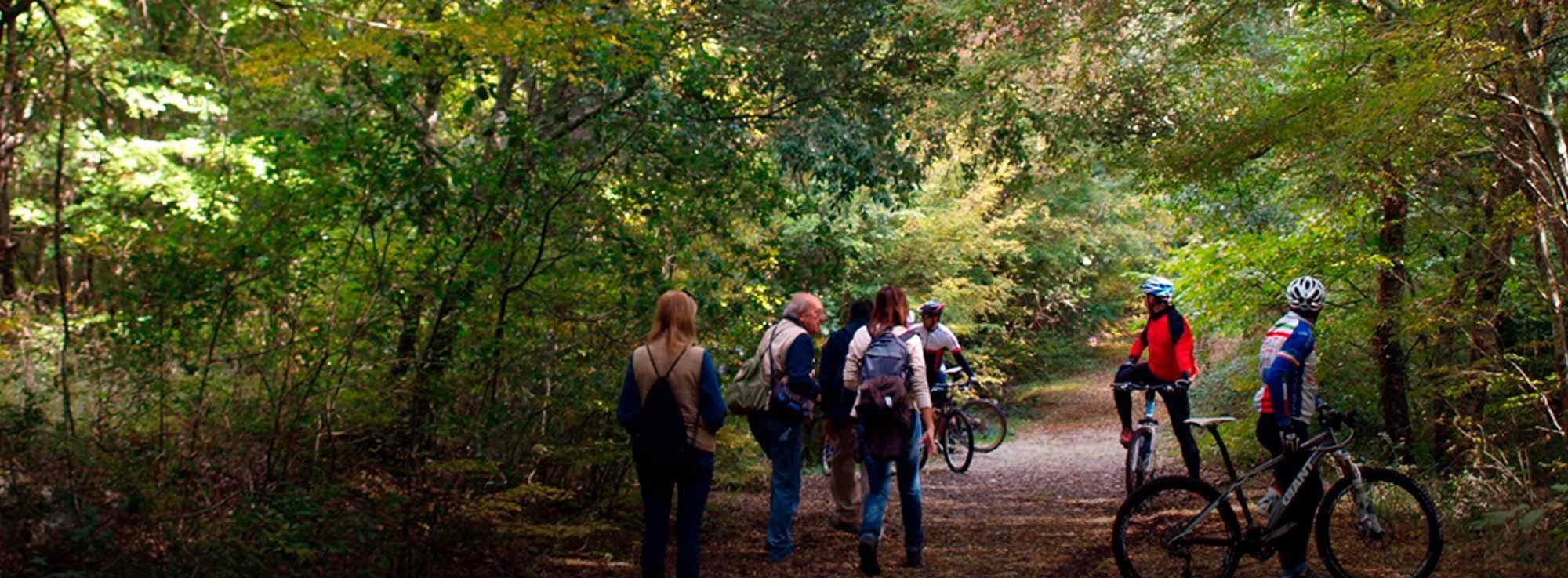 Martina Franca: Da Martina Franca escursione nel Bosco delle Pianelle