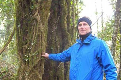 Foresta Umbra, ci sono le liane: le studiano dagli Usa