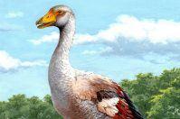 Oca gigante del Gargano: era alta un metro e mezzo, pesante 20 chili
