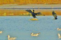 Il 2017 porta in dote una Spatola Bianca nell'oasi Li Punzi