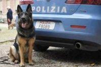 """Brindisi, Warren il cane poliziotto cerca """"casa"""""""