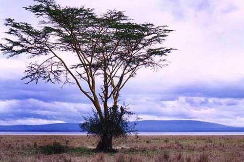 """""""Rosso come la Terra, Nero come la Pelle. Il mio viaggio in Kenya"""""""