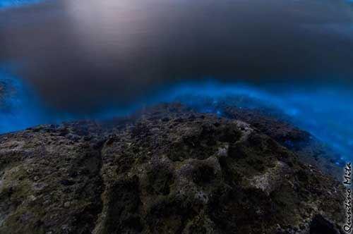 Mare blu in Salento, anche di notte: l'effetto causato dalla Noctiluca scintillans