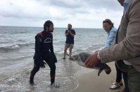 Torre Canne, tartarughe marine tornano alla libertà