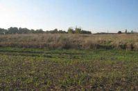 Banca della Terra, la Puglia rivaluta terreni incolti