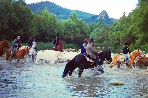 Dal Molise a San Marco in Lamis a cavallo: il progetto Transumanza d'Italia