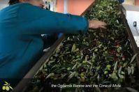 """L'olio di Puglia arriva negli Usa: ecco il racconto dell'""""oro verde"""""""