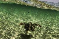 Le Cesine, ritorno alla vita per una tartaruga ferita: le foto