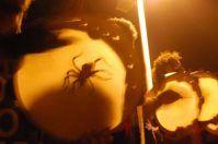 Tarantella del Gargano e Pizzica Salentina: un viaggio tra suoni e ritmi pugliesi