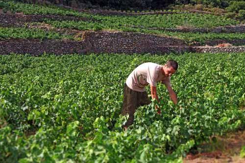 """Punta sui giovani agricoltori la Puglia con il bando """"Fondi per centinaia di ragazzi"""""""
