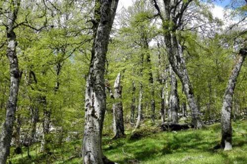 Foresta Umbra, le faggete Patrimonio mondiale dell'Umanità
