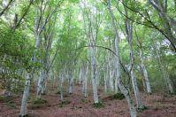 Le faggete della Foresta Umbra dichiarate Patrimonio dell'Umanità dall'Unesco