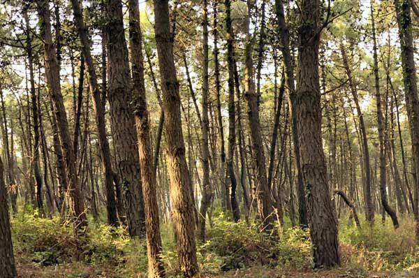 Aree forestali in Puglia, 110 milioni da investire per incrementare superfici