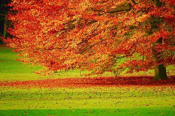 Fermenti d'autunno