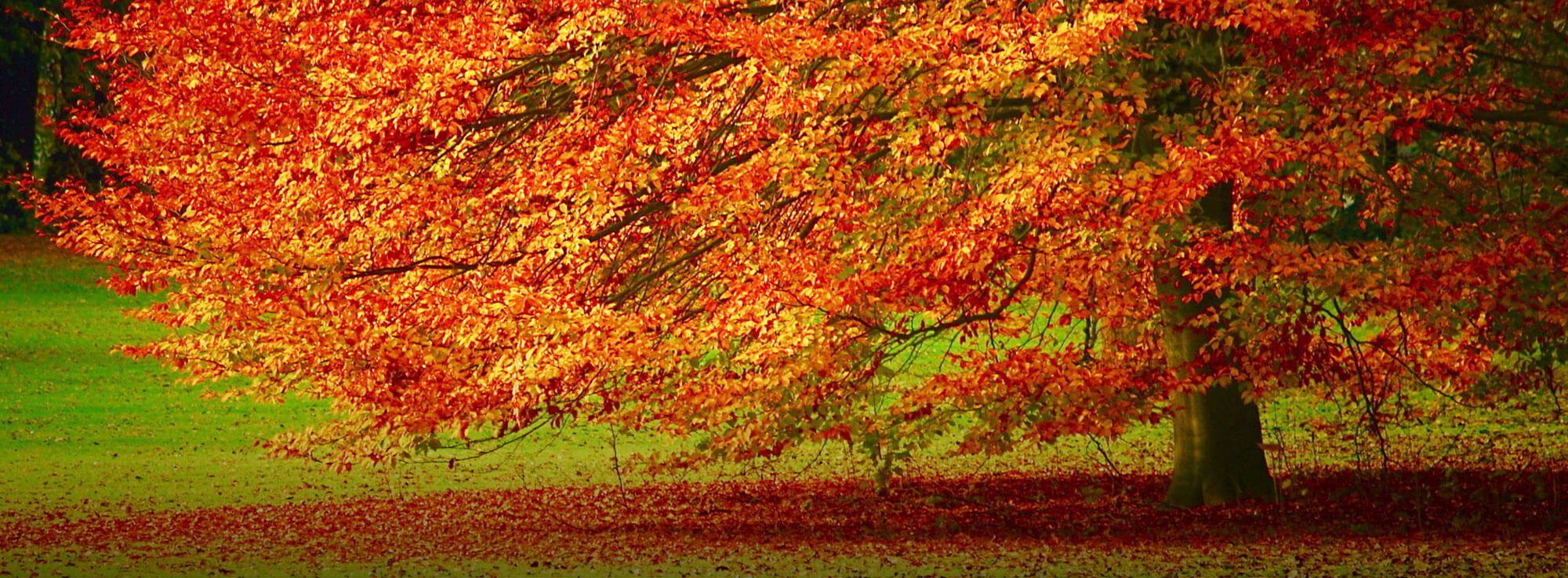 Felline: Fermenti d'autunno