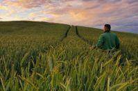 Straordinario potenziale agricolo per la Puglia, fatturato di 4 miliardi