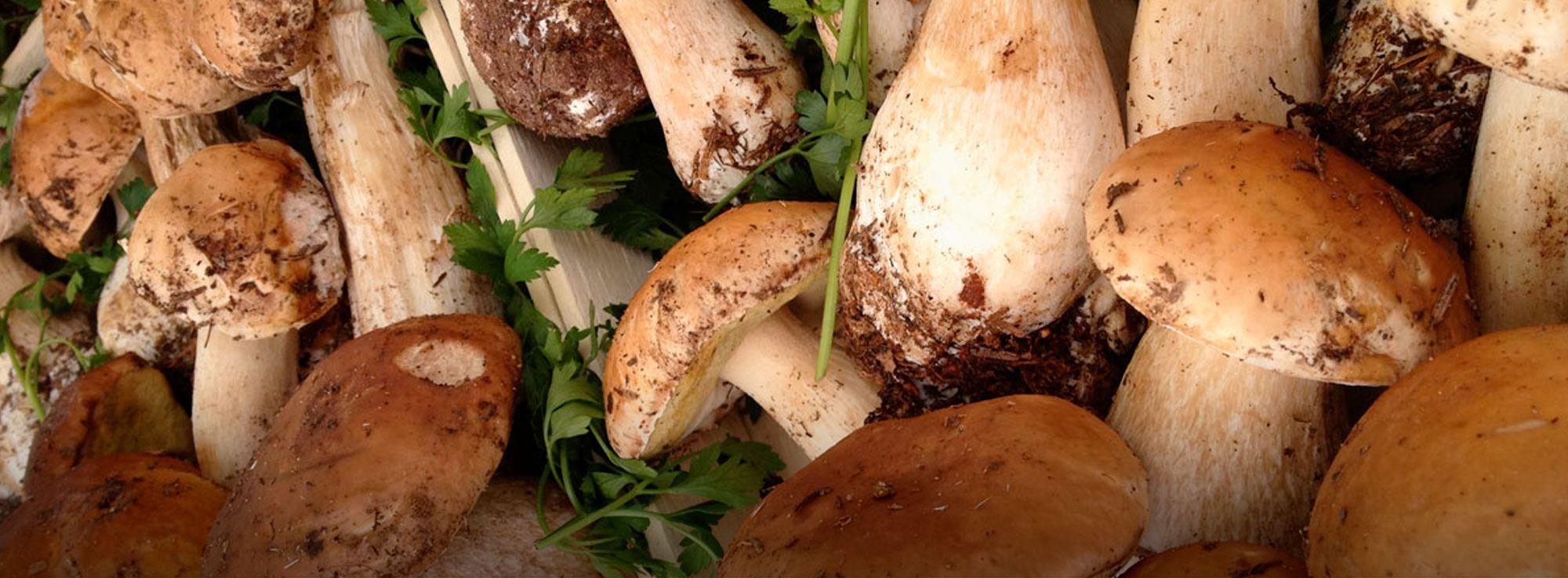 Minervino Murge, Spinazzola, Ruvo di Puglia, Gravina in Puglia e Cassano delle Murge: Sagra del fungo cardoncello