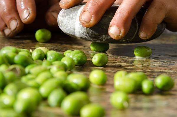 Olio novello dai semenzali a Gagliano del Capo, attesi i risultati