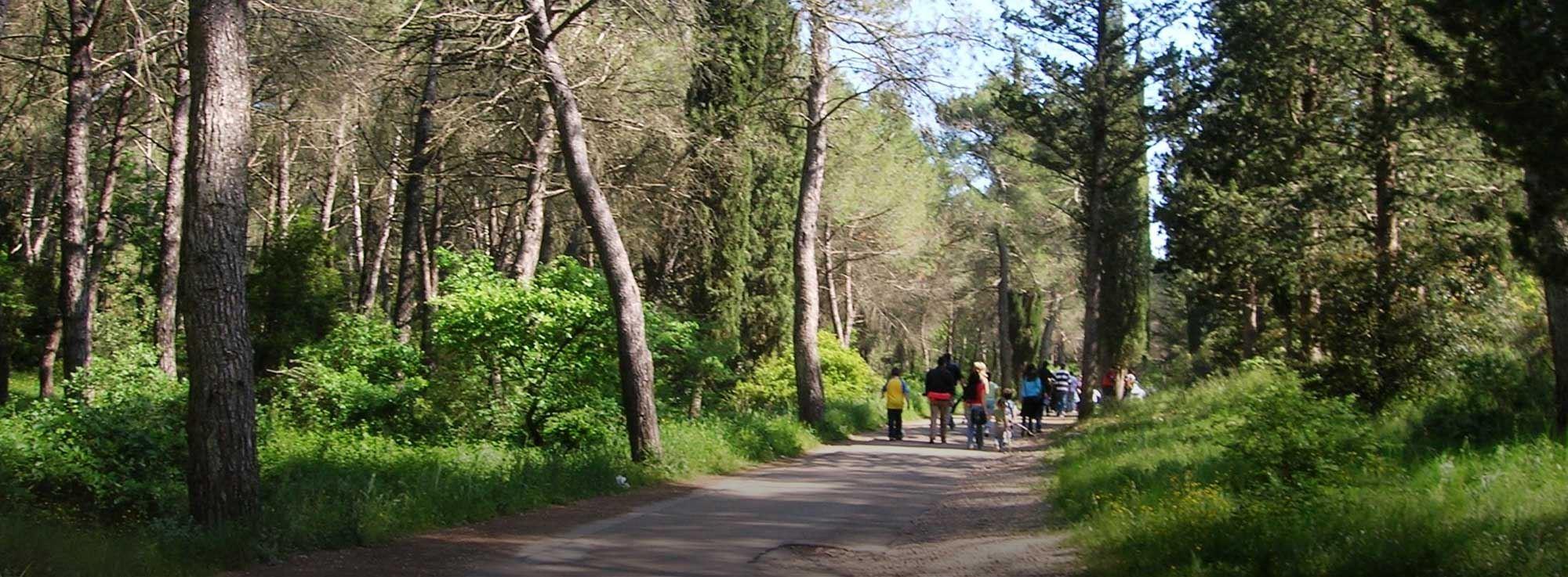 Cassano delle Murge: Tecniche di orientamento in foresta