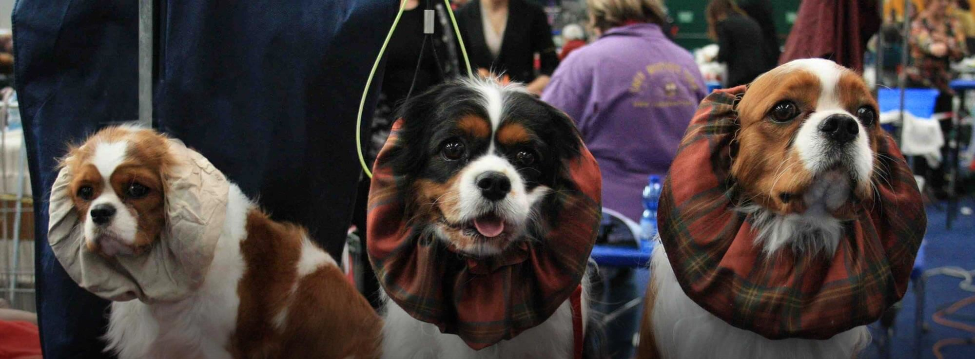 Foggia: Esposizione internazionale canina