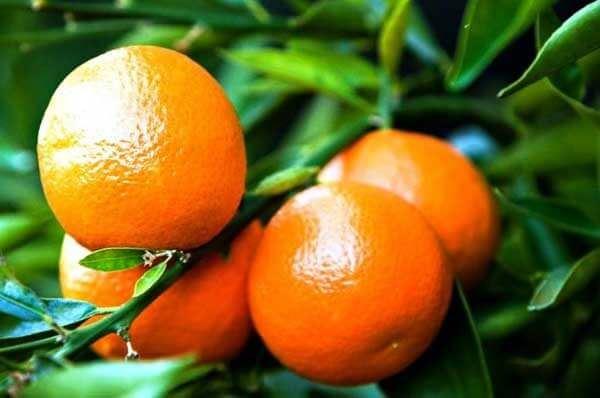 sagra palagiano mandarino