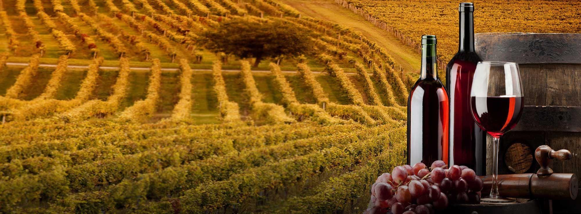 Barletta: Nero di Troia e vitigni pugliesi