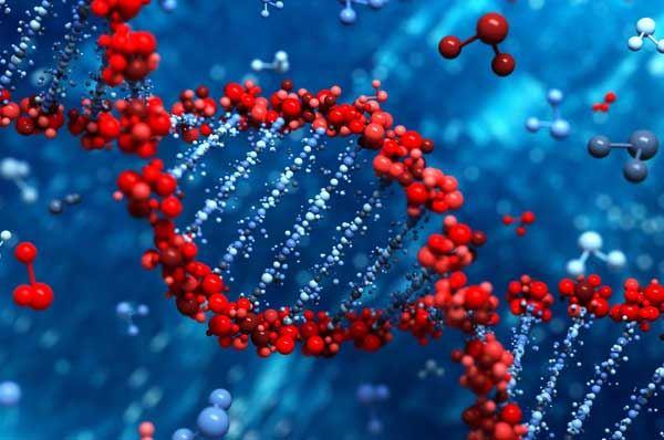 gene bari