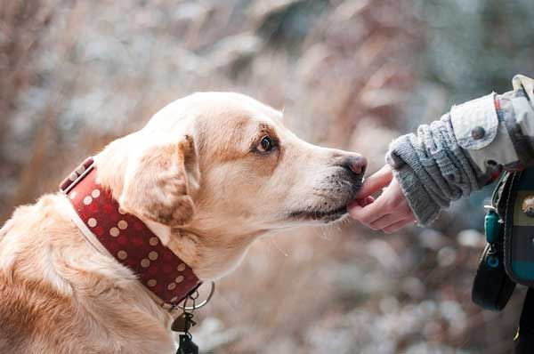 Patentino per proprietari di cani a Foggia, un corso aperto a tutti
